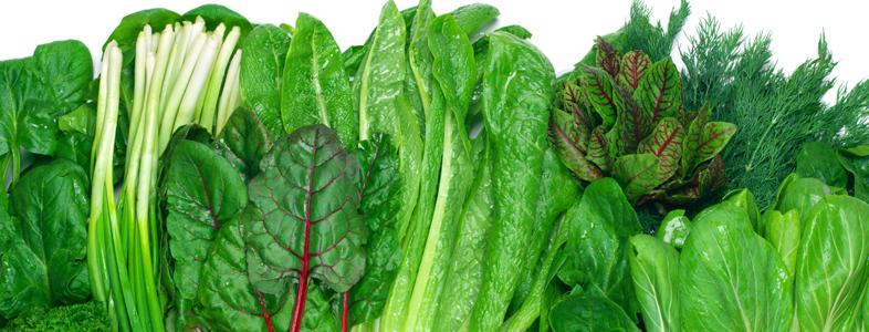 キャベツやレタス、白菜やホウレン草、小松菜や春菊などの葉菜類